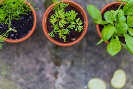 How do we grow as Christians?